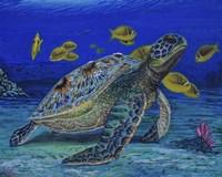 Turtle Tale Fine-Art Print