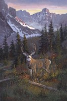 High Country Muley Fine-Art Print