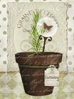 Herb Pots Rosemary Fine-Art Print