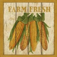 Farm Fresh Corn Fine-Art Print