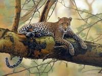 African Leopard Fine-Art Print