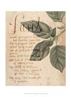 Herb Study I Fine-Art Print