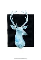 White Tail Bust I Fine-Art Print