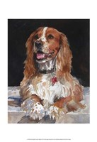 Jack English Cocker Spaniel Fine-Art Print