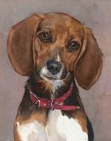 Lucy English Pocket Beagle Fine-Art Print