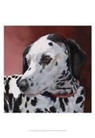 Chloe Dalmatian Fine-Art Print