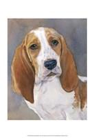 Waylon Bassett Hound Fine-Art Print
