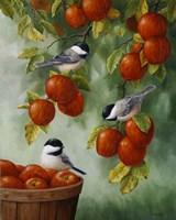 Apple Harvest Chickadees Fine-Art Print