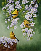 Goldfinch Blossoms Fine-Art Print