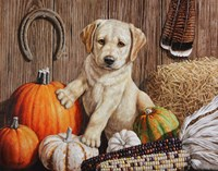 Pumpkin Harvest Puppy Fine-Art Print