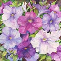 Petunias Fine-Art Print