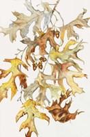 Rust Colored Oak Leaves Fine-Art Print