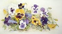 Pansies In Yellow- Purple Fine-Art Print