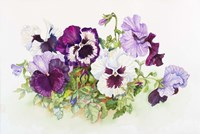 White and Purple Pansies II Fine-Art Print