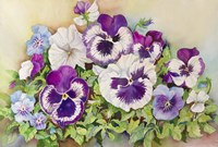 Pansy Cluster Fine-Art Print