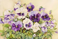 White and Purple Pansies Fine-Art Print