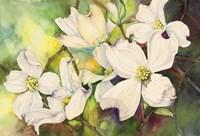 White Dogwood Fine-Art Print