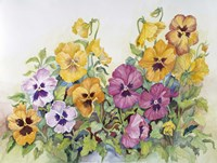 Amber Pansies Fine-Art Print