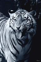 White Tiger 2 Fine-Art Print