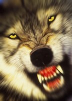 Wolf Motion Fine-Art Print