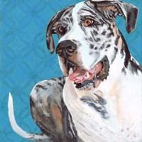Dlynn's Dogs - Apollo Fine-Art Print