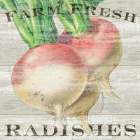 Farm Fresh Radishes Fine-Art Print