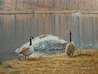 South Carolina Geese Fine-Art Print