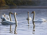Hanover Swans Five Fine-Art Print