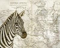 Burchell's Zebra Fine-Art Print