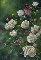 Purple Finch Fine-Art Print