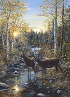 Whitetail Deer Fine-Art Print