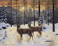 Evening Silence Fine-Art Print