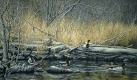 Early Morning Mallards Fine-Art Print