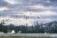 Geese Flying Over Farmland Fine-Art Print