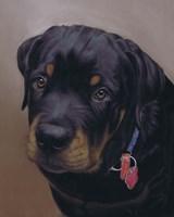 Rottweiler Solo Fine-Art Print