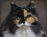 Calico Cat Portrait Fine-Art Print