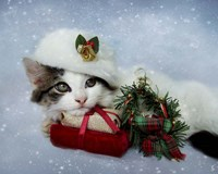 Christmas Kitten In The Snow Fine-Art Print