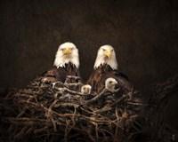 Family Is Forever Bald Eagles Fine-Art Print