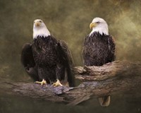 Mates Bald Eagle Pair Fine-Art Print
