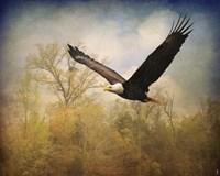 Monarch Of The Skies Bald Eagle Fine-Art Print