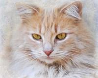 Orange Tabby Cat Portrait Fine-Art Print