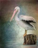 Perched Pelican Fine-Art Print