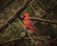 Song Of The Red Bird 1 Fine-Art Print