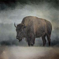 Stormy Day Buffalo Fine-Art Print