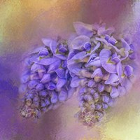 Enticing Wisteria Fine-Art Print