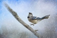 Bluejay In The Snow Fine-Art Print