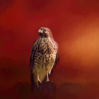 Hawk On A Hot Day Fine-Art Print