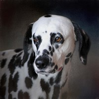 The Firemans Dog Dalmatian Fine-Art Print