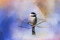 Winter Morning Chickadee Fine-Art Print