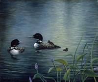 Virginias Loons Fine-Art Print
